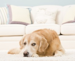 Pet and Urine Removal & Treatment